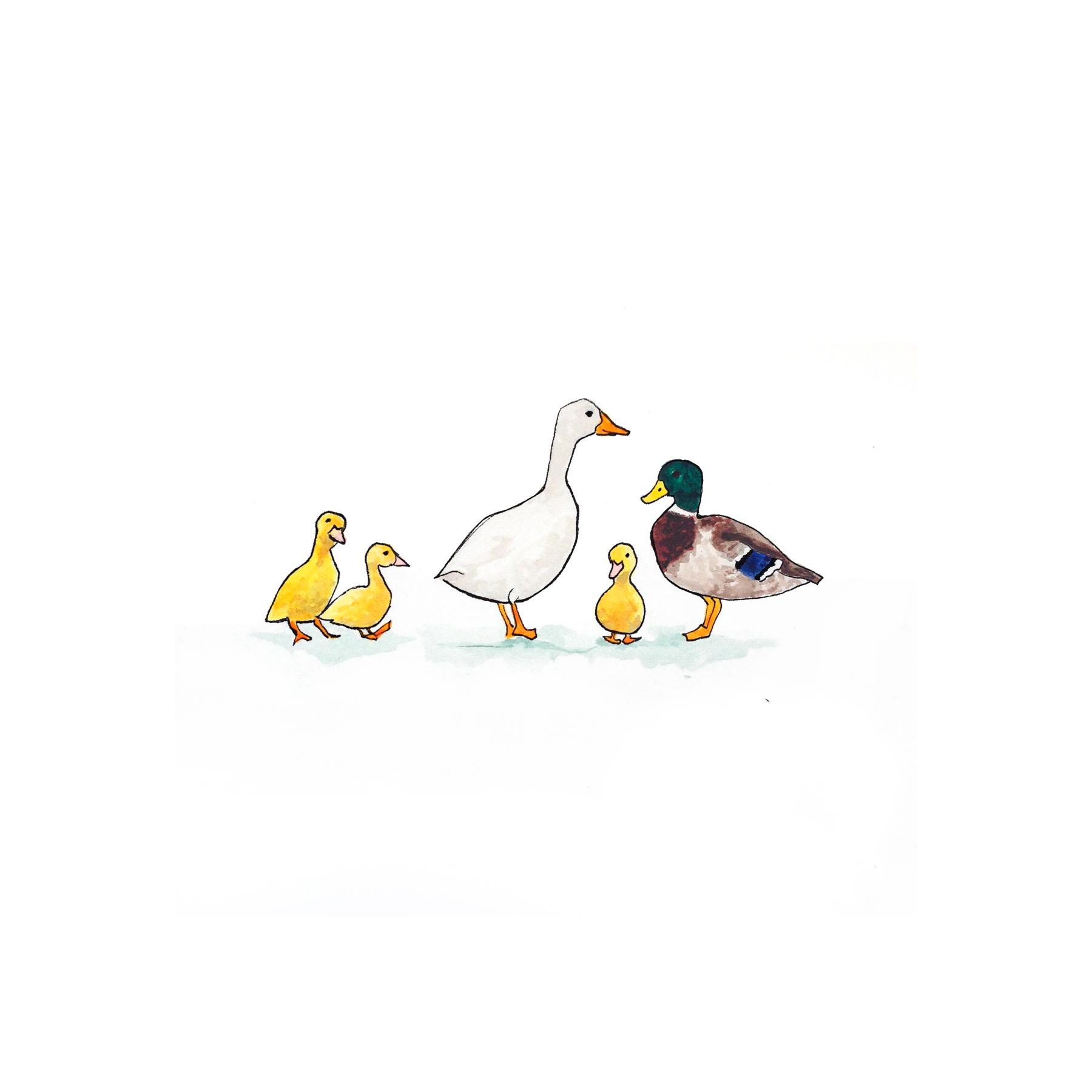 27-140702-ducks-fb.jpg