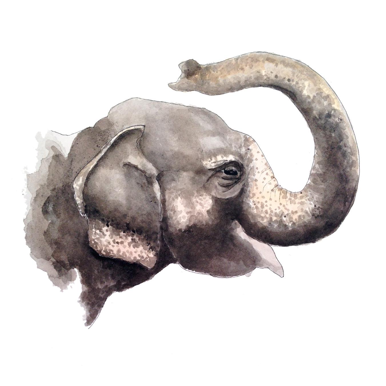 38-140916-elephant.jpg