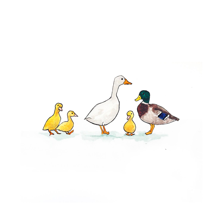 27-140702-ducks.jpg