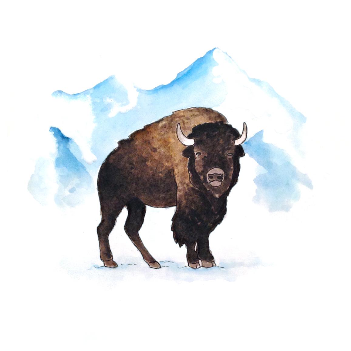 30-140723-bison.jpg