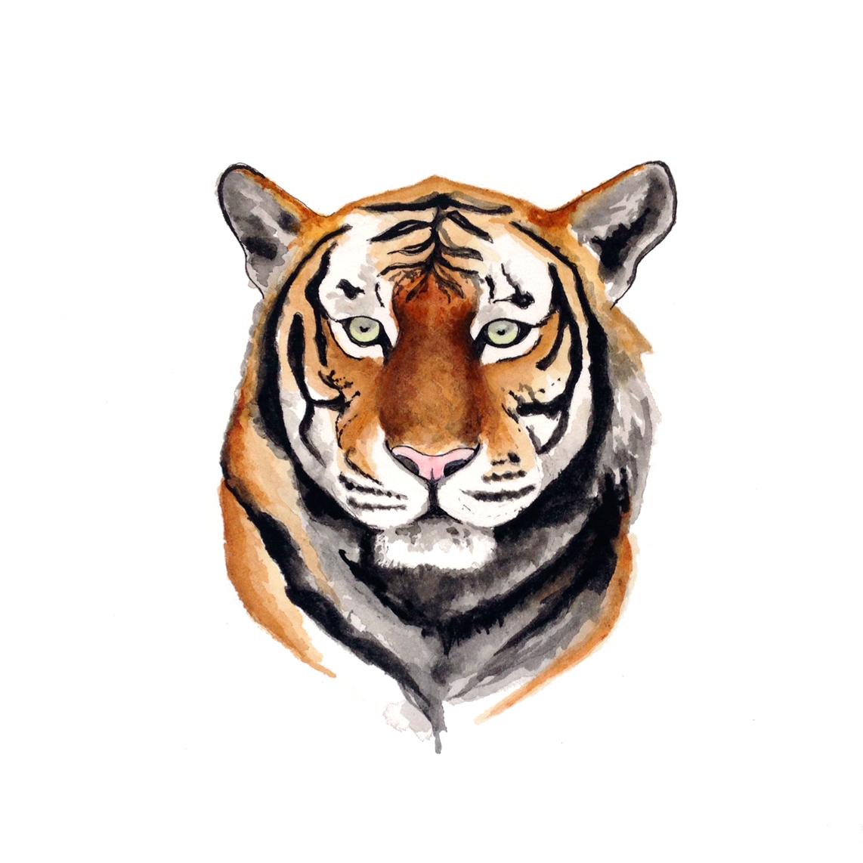 32-140805-tiger.jpg