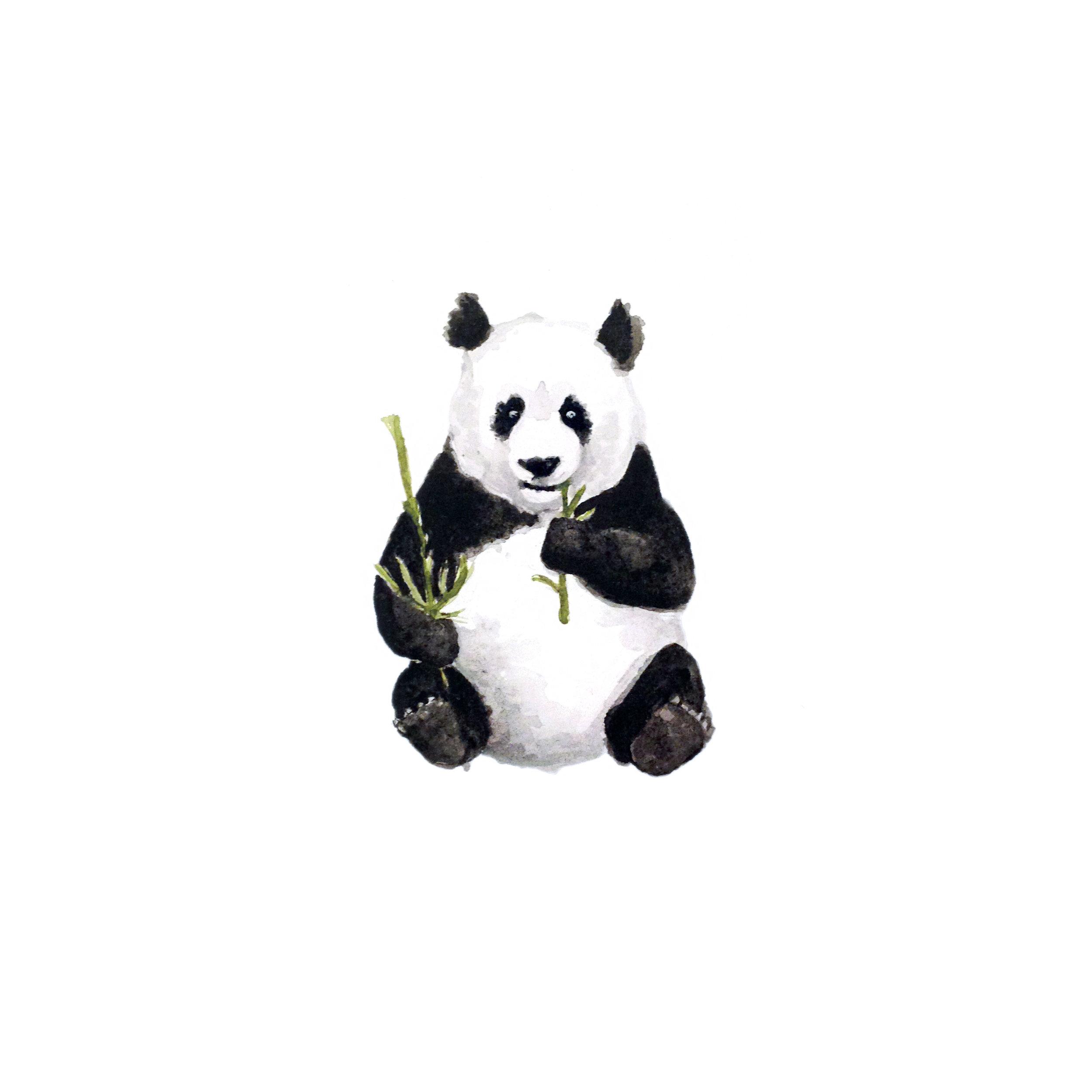 34-140819-panda.jpg
