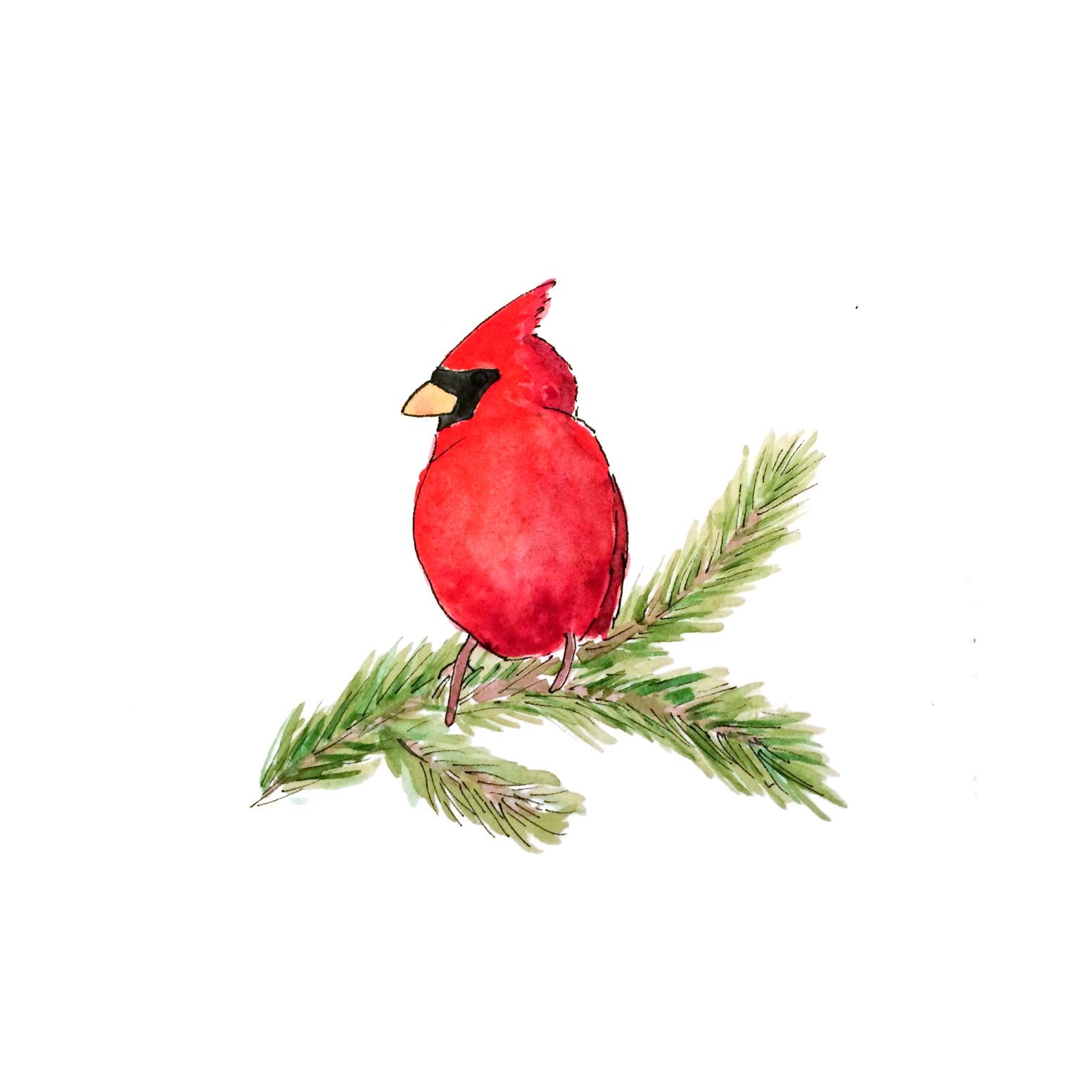50-141217-cardinal.jpg