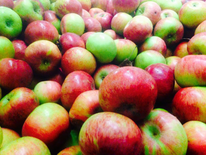 A beautiful bin of Cortland apples