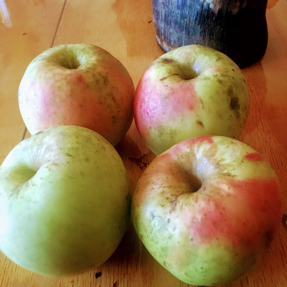 Wild-foraged apples from a local donor