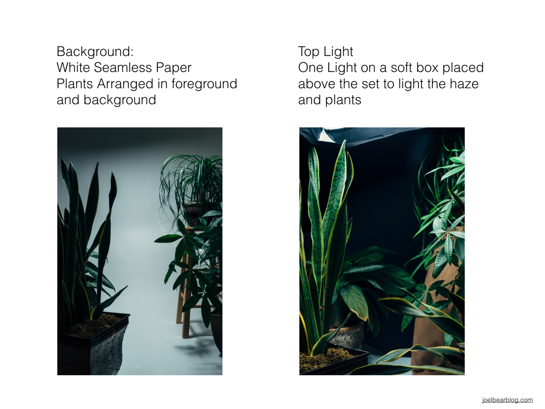 Jungle Cinematic inspired photoshoot | Joel Bear Blog