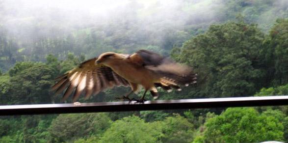 Falcon Landing