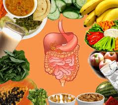 Digestive-tract-and-food.jpg