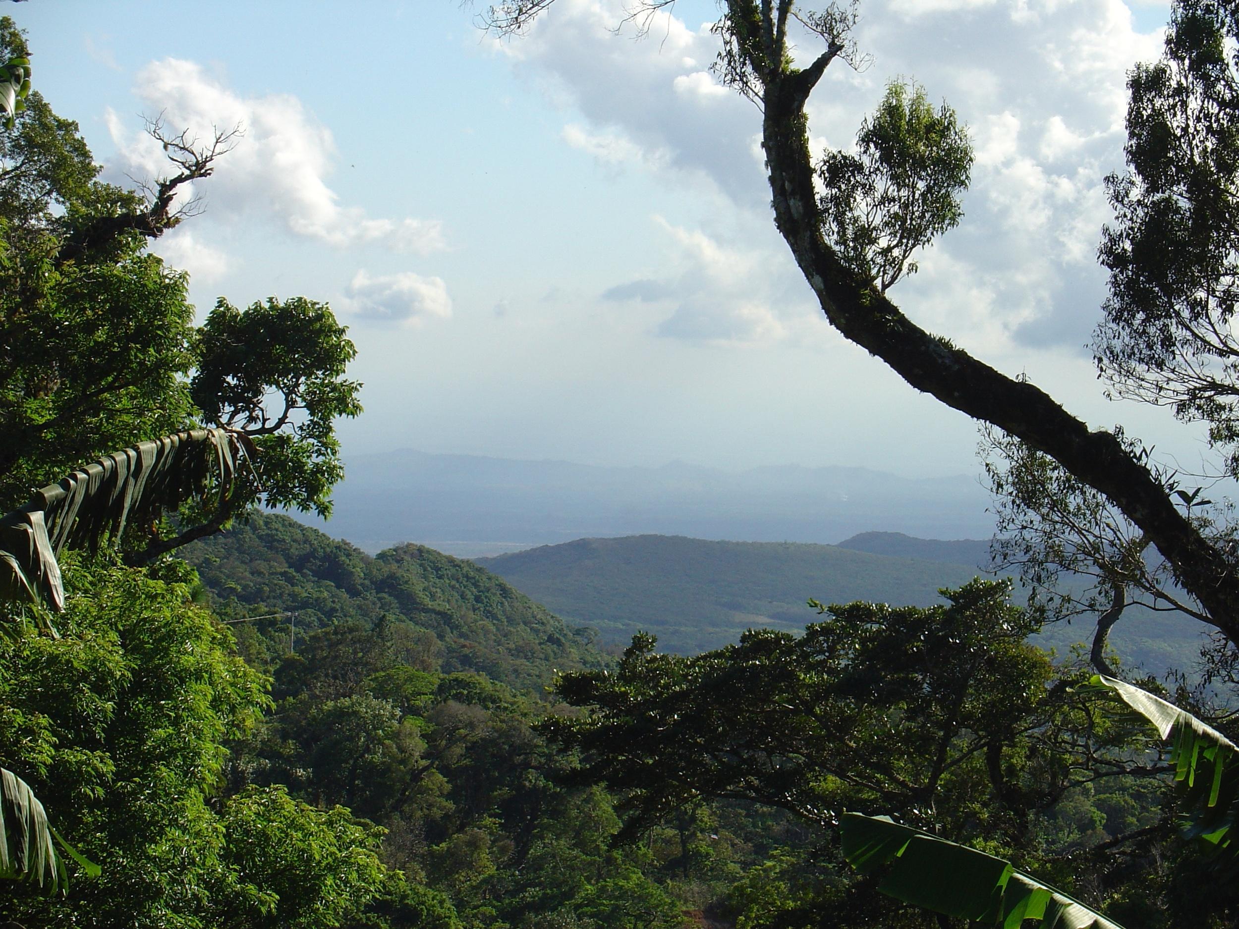 Cloud Forest Medicine