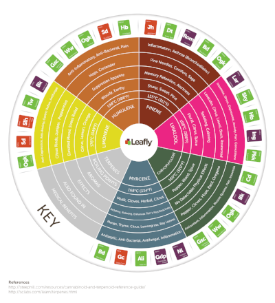 jXSS0pS1Sw2p2eq176GL_Leafly-Cannabis-Terpene-Wheel-Infographic.png
