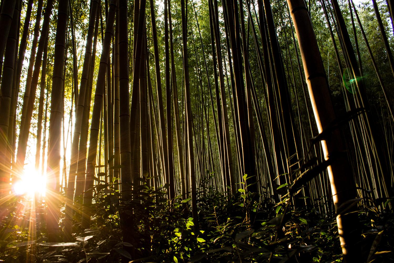 Daenamugol bamboo forest near sunset