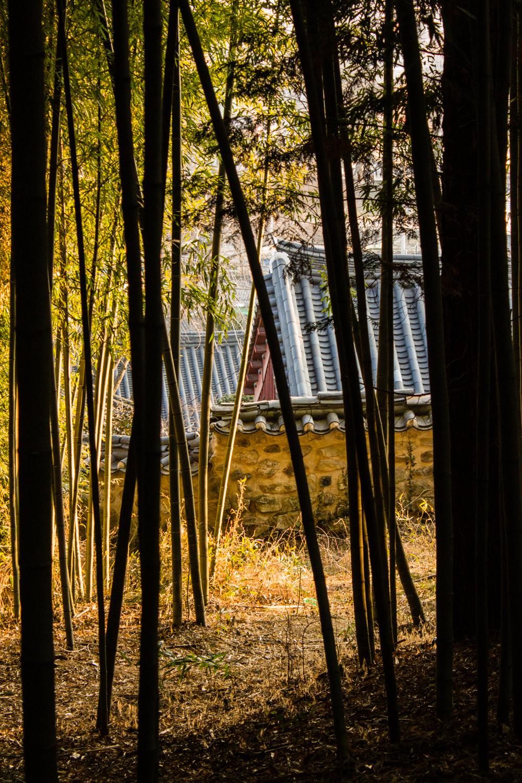 Traditional buildings peeking through the bamboo in Daenamugol