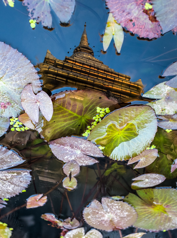 Dawn light illuminates the stupa,reflected in a lotus pot, at Chiang Mai's oldest wat, Chiang Man.
