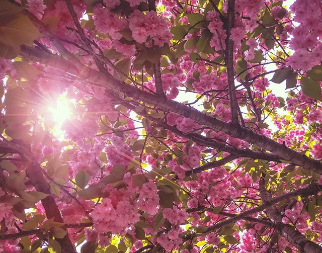 At laaaaaaast. #NYC #Spring #Sprung #HeyyyImBloominHeee