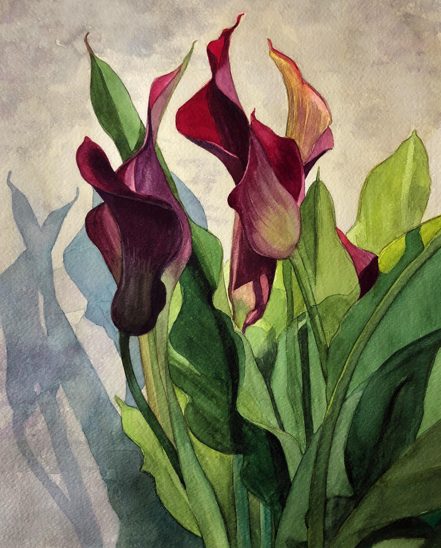 """Crimson Calla Lilies"""