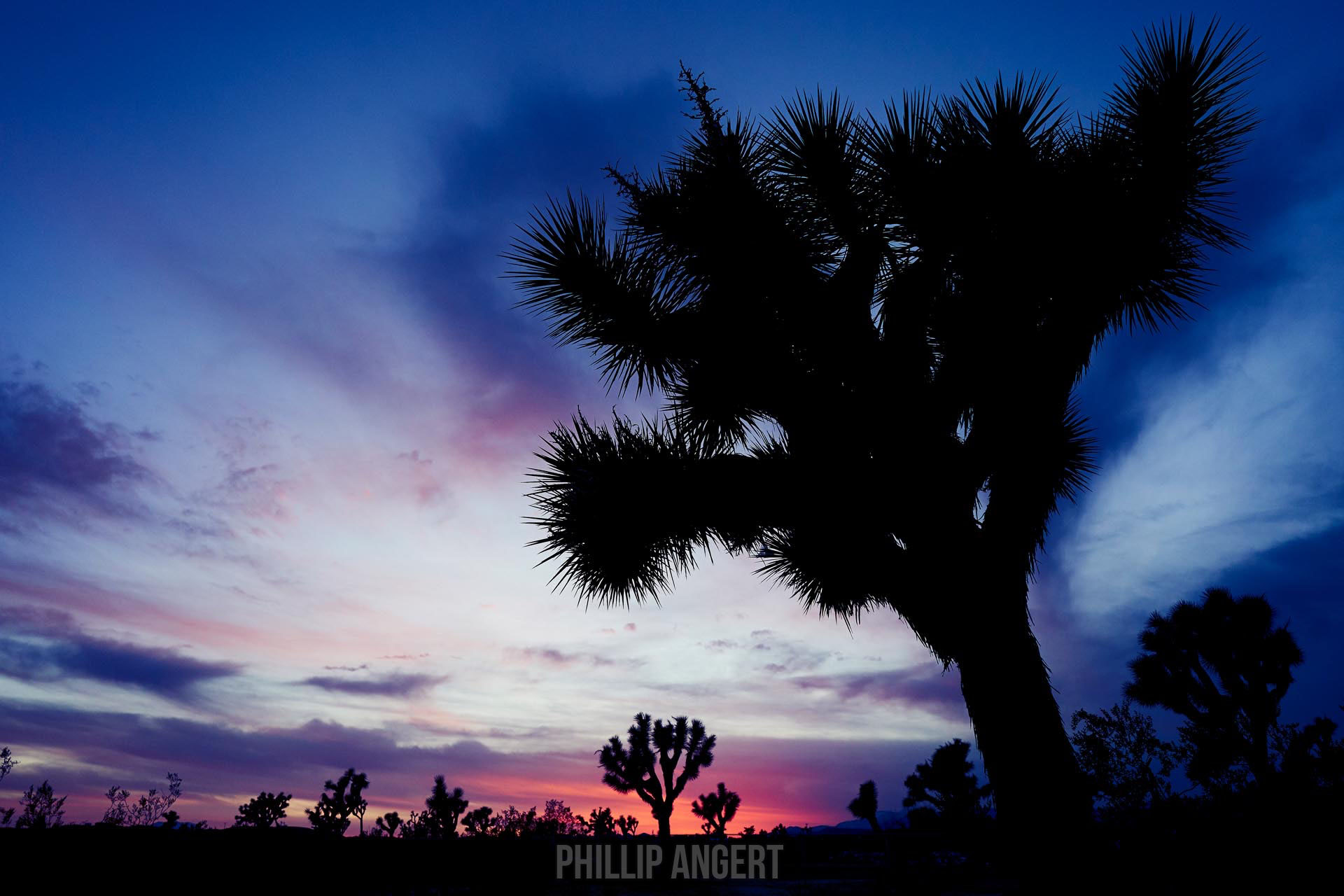 JoshuaTree20180116PhillipAngert - 4-watermarked.jpg