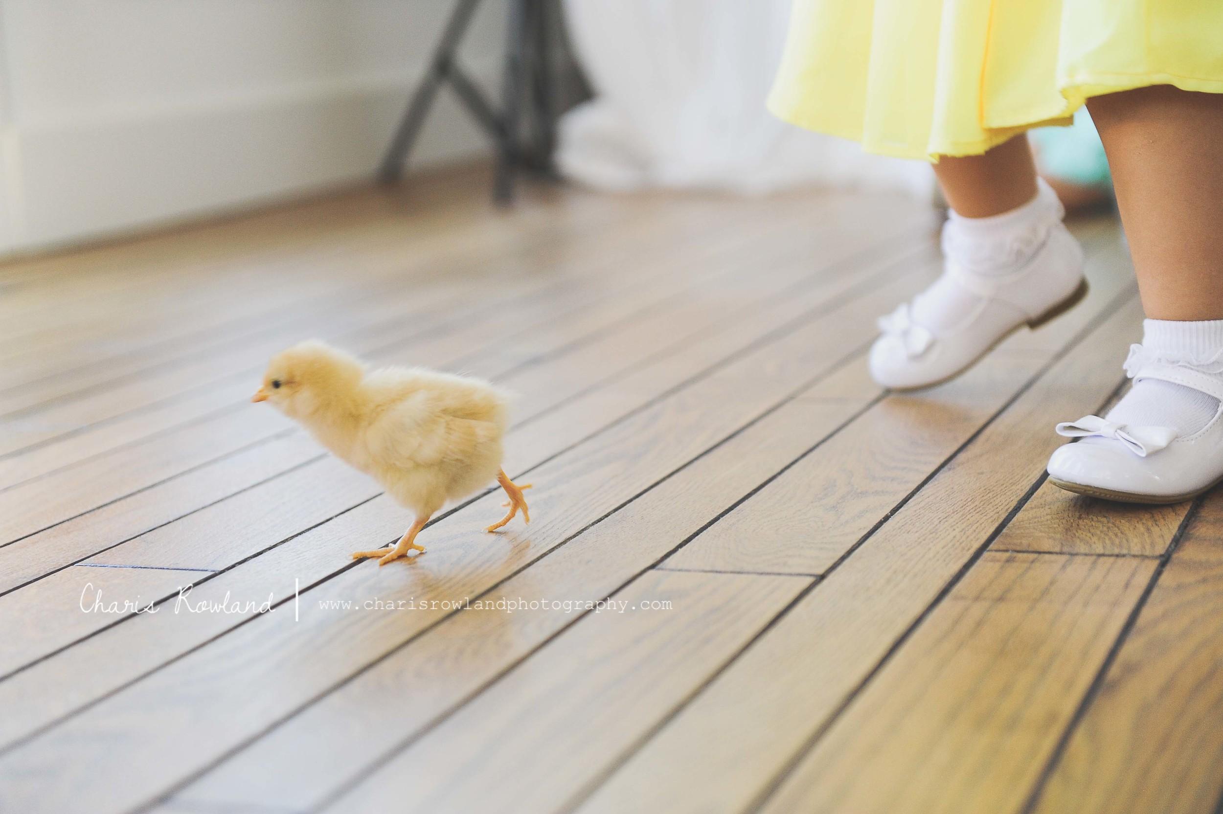 girls-chicks-59.jpg