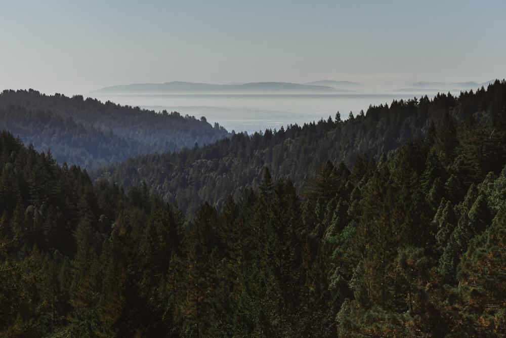 Santa-Cruz-Redwoods-wedding-at-Pema-Osel-Ling-1.jpg