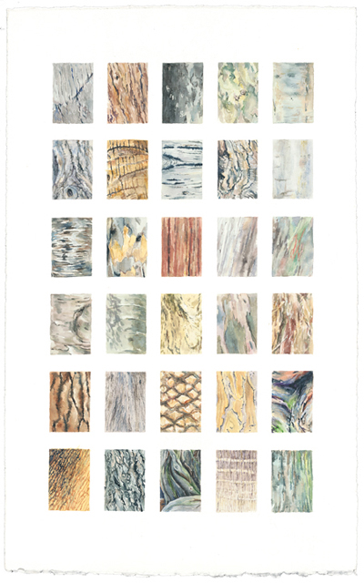 Bark 21 x 13 watercolor