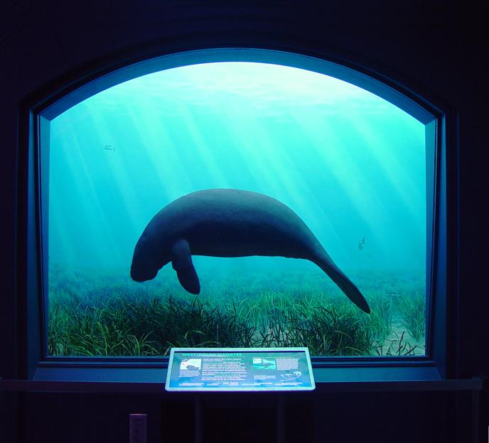 Milstein Hall of Ocean Life — Iris Jan