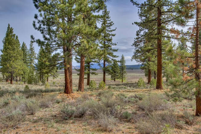 7445 Lahontan Dr Truckee CA-small-006-View from within the Property-666x444-72dpi.jpg