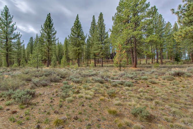 7445 Lahontan Dr Truckee CA-small-008-Looking Back toward Front of-666x444-72dpi.jpg