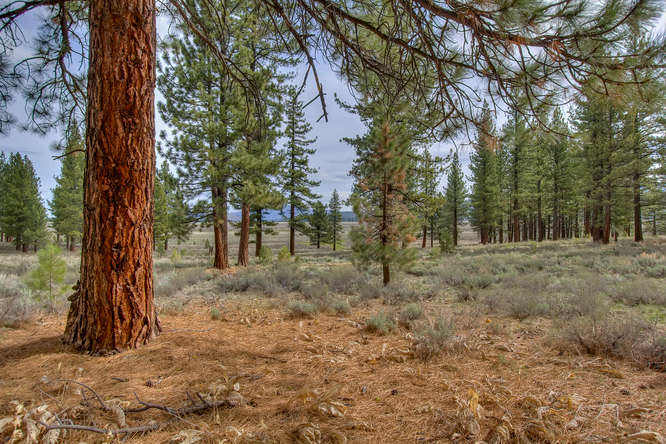 7445 Lahontan Dr Truckee CA-small-005-View from within the Property-666x444-72dpi.jpg