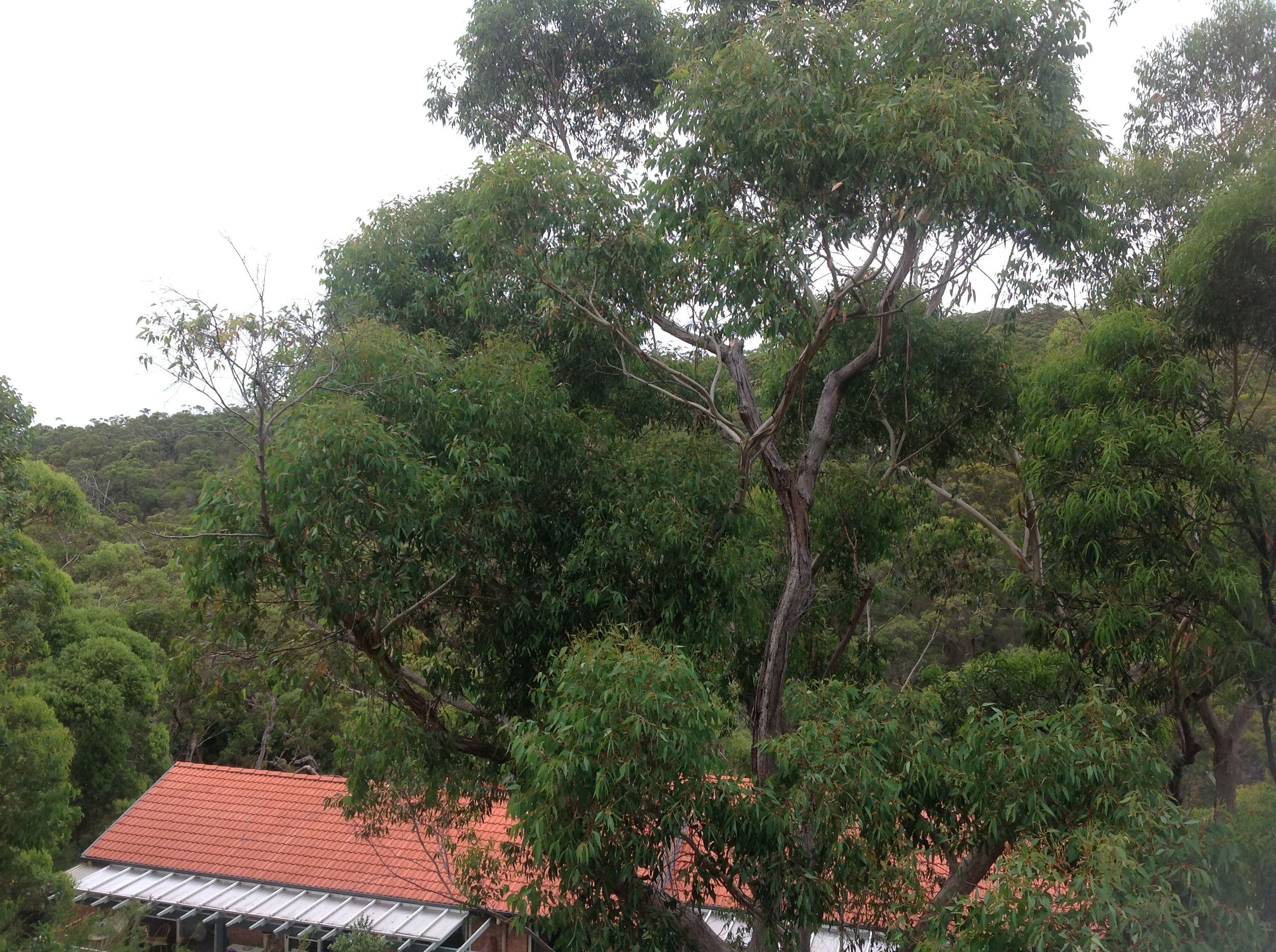 The edge of the bush, Sydney Australia