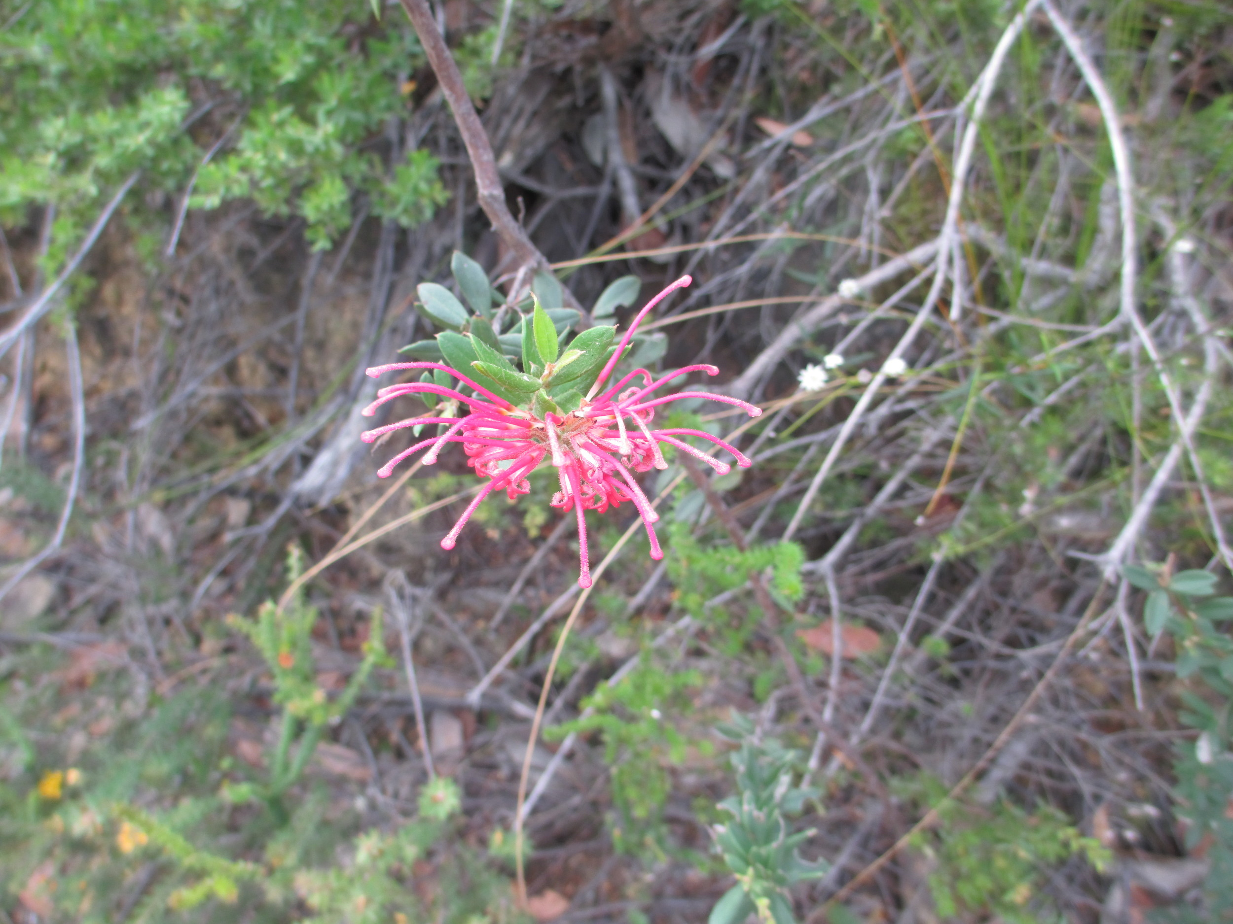 Looks like it's adapted for butterflies. We have seen many butterflies, but no hummingbirds. Are they here?