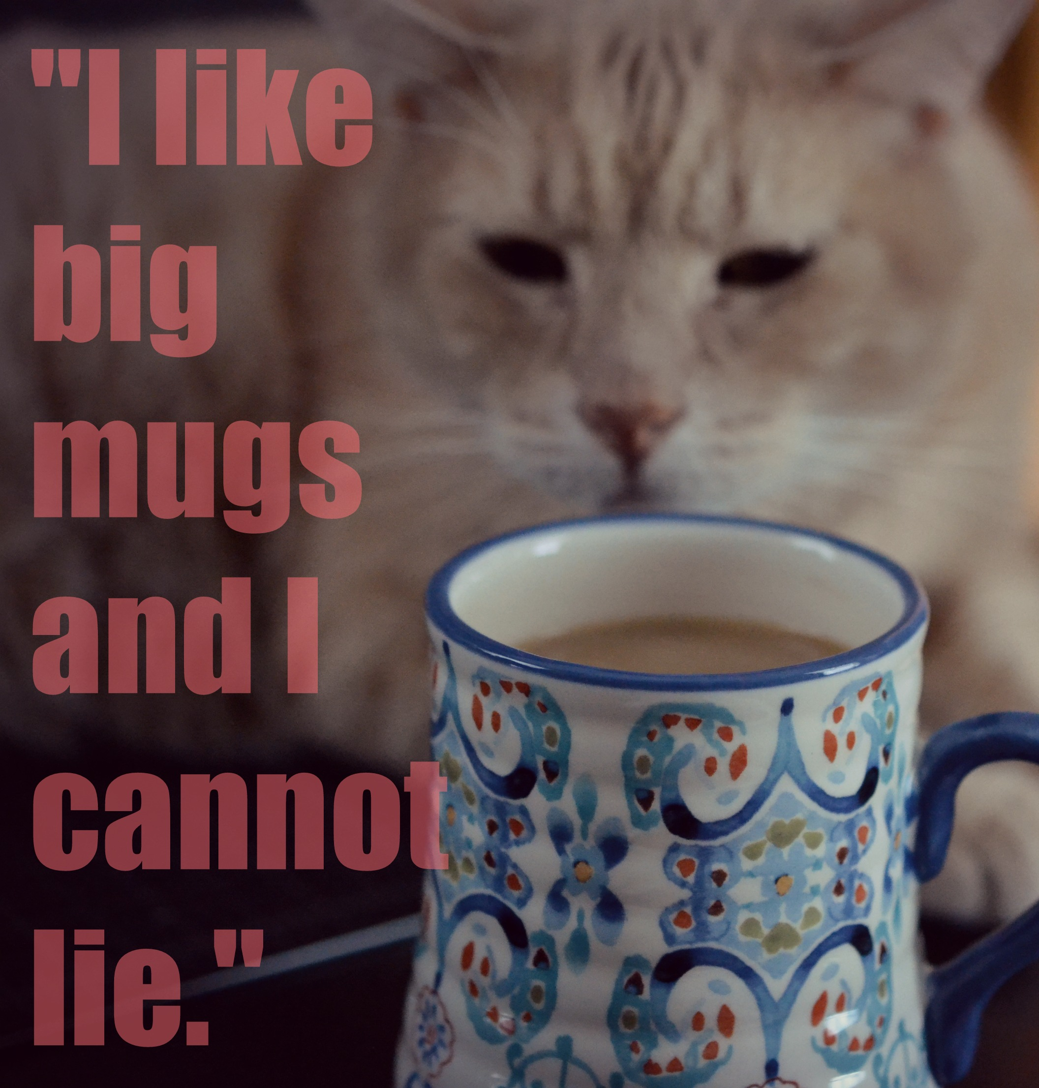 {Ziggy purrfers coffee}