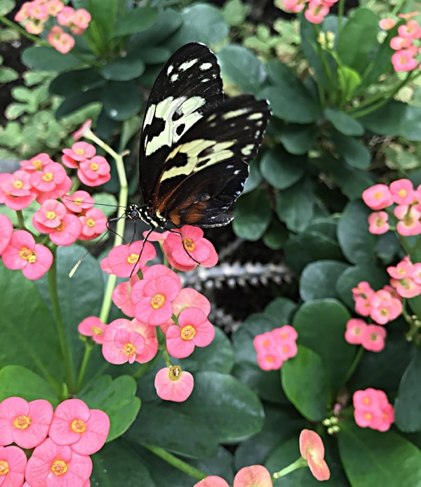 Pretty Little Butterfly Doesn't Care About Whatever Crap Storm Your Life May be.
