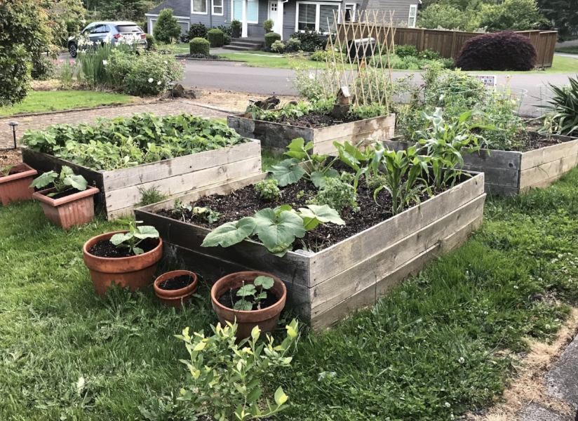 Our veggie garden.