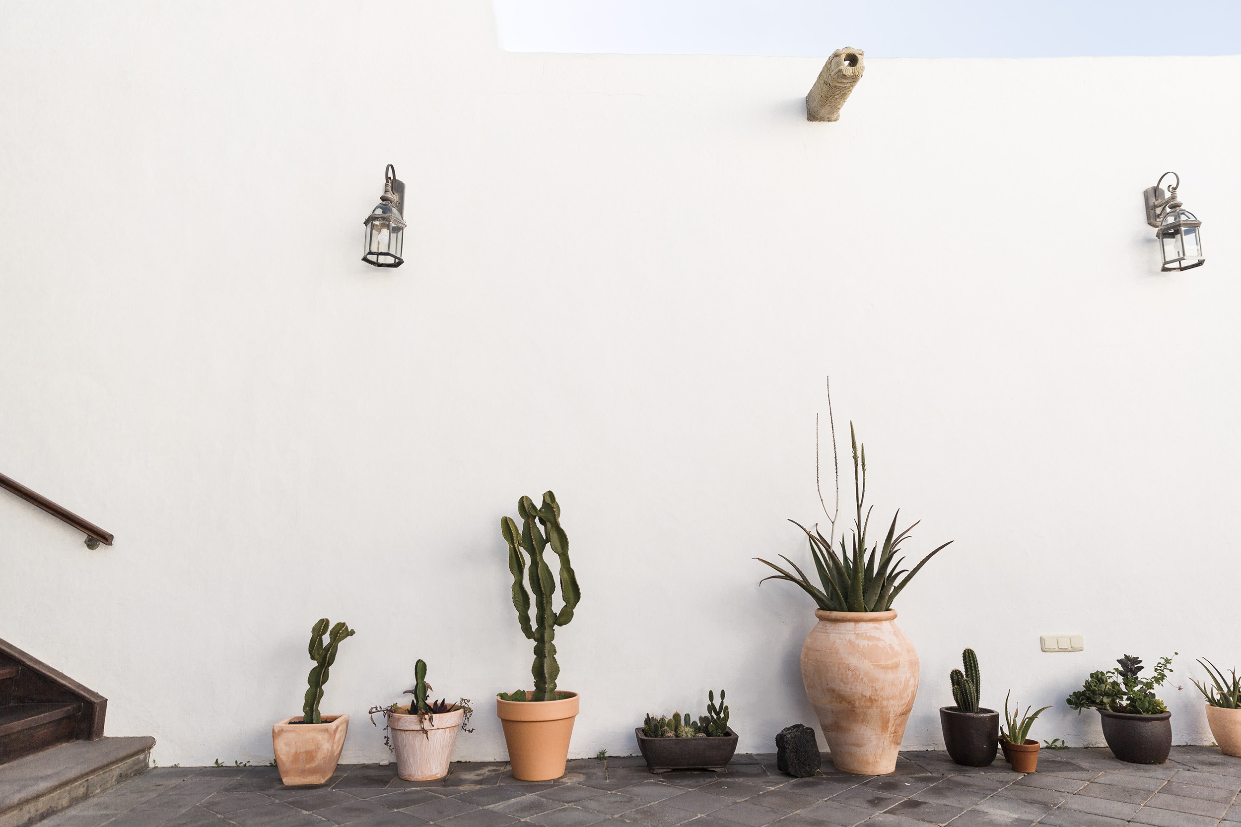 Simple cacti in the Canary Islands by Rebecca Stumpf, Denver Boulder Colorado Editorial and Commercial Photographer.
