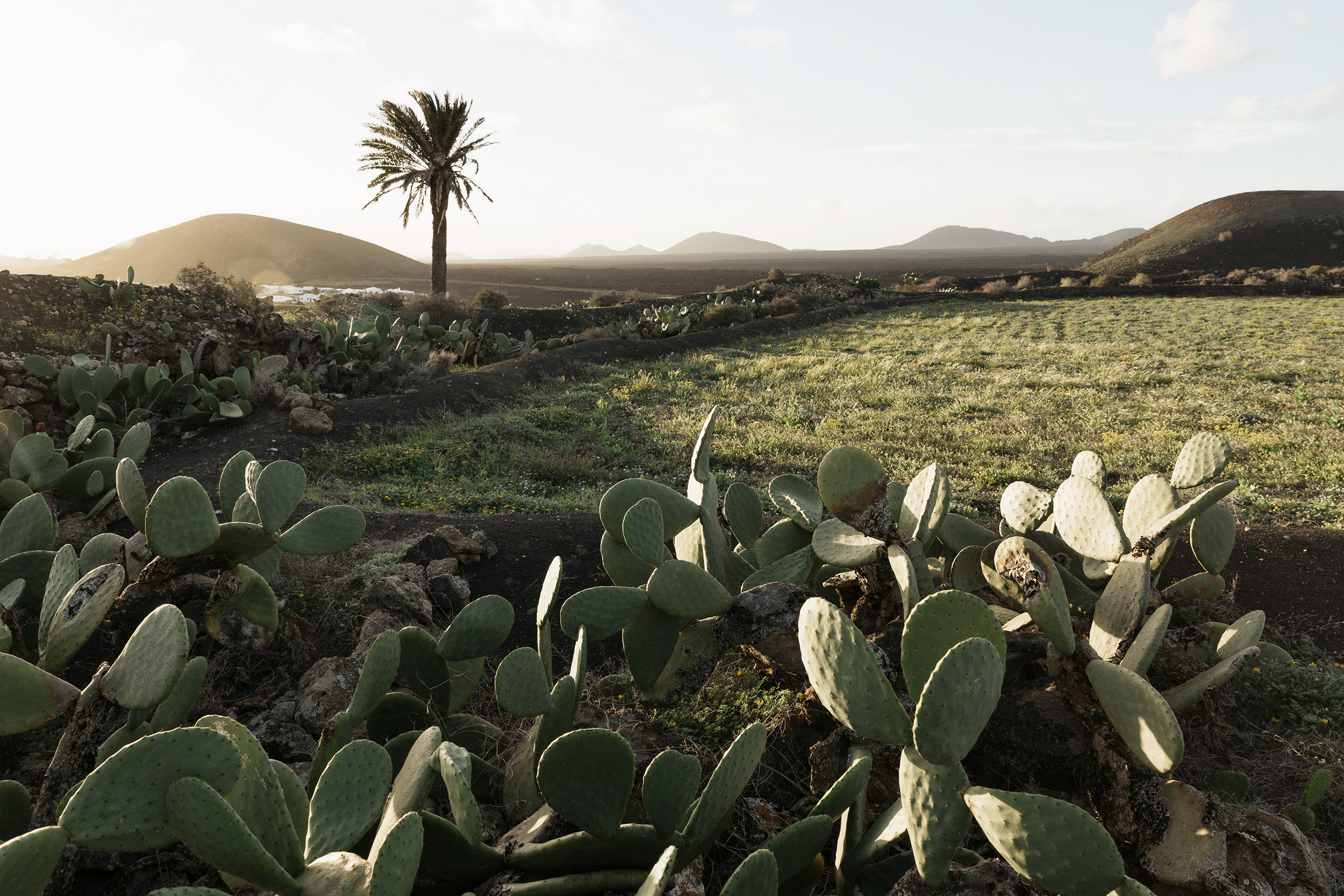 A typical Lanzarotan landscape in the Canary Islands by Rebecca Stumpf, Denver Boulder Colorado Editorial and Commercial Photographer.