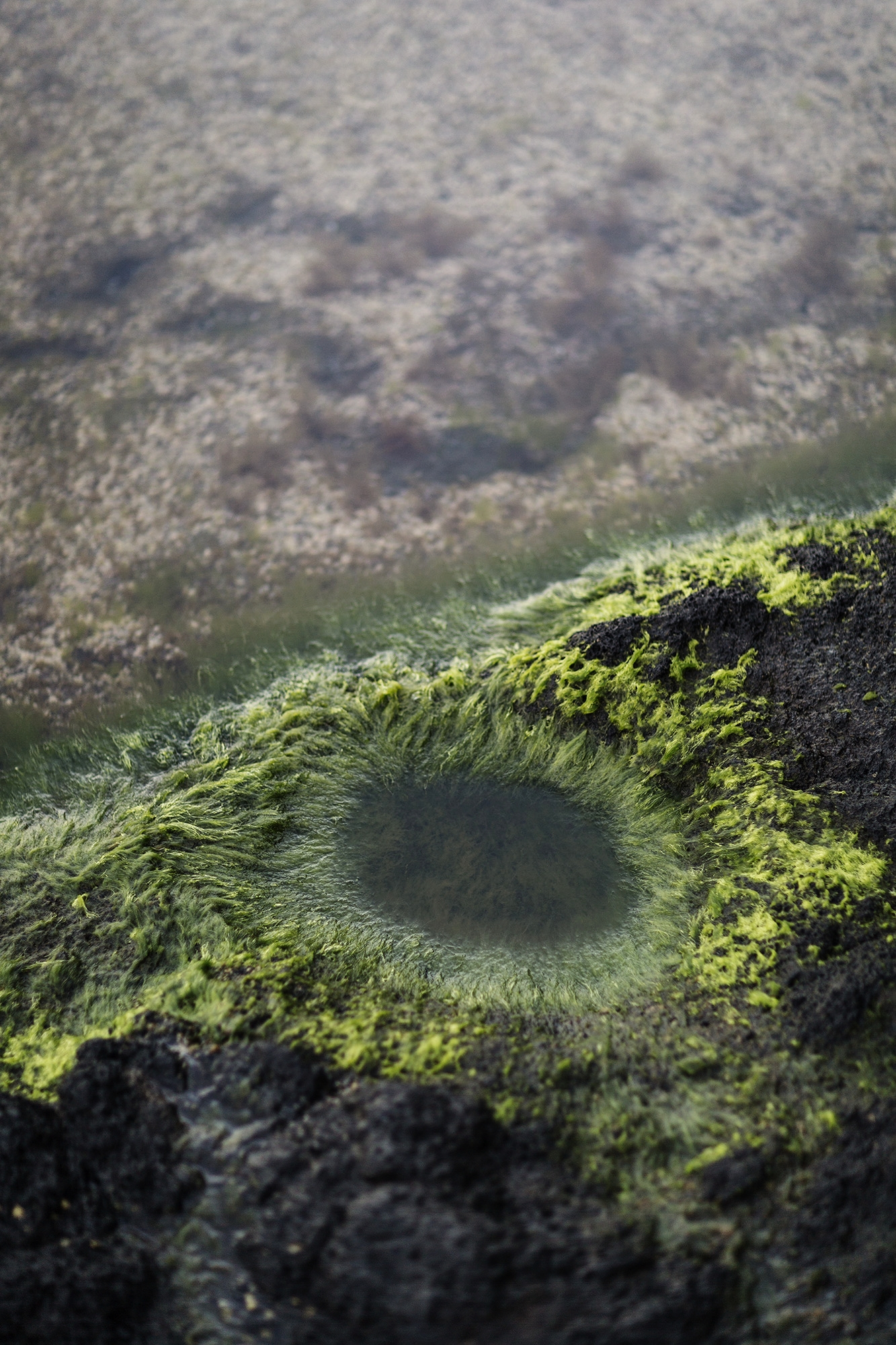 Algae at a local swimming hole in La Gomera in the Canary Islands by Rebecca Stumpf Denver Boulder Colorado Editorial and Commercial Food Travel and Lifestyle Photographer.