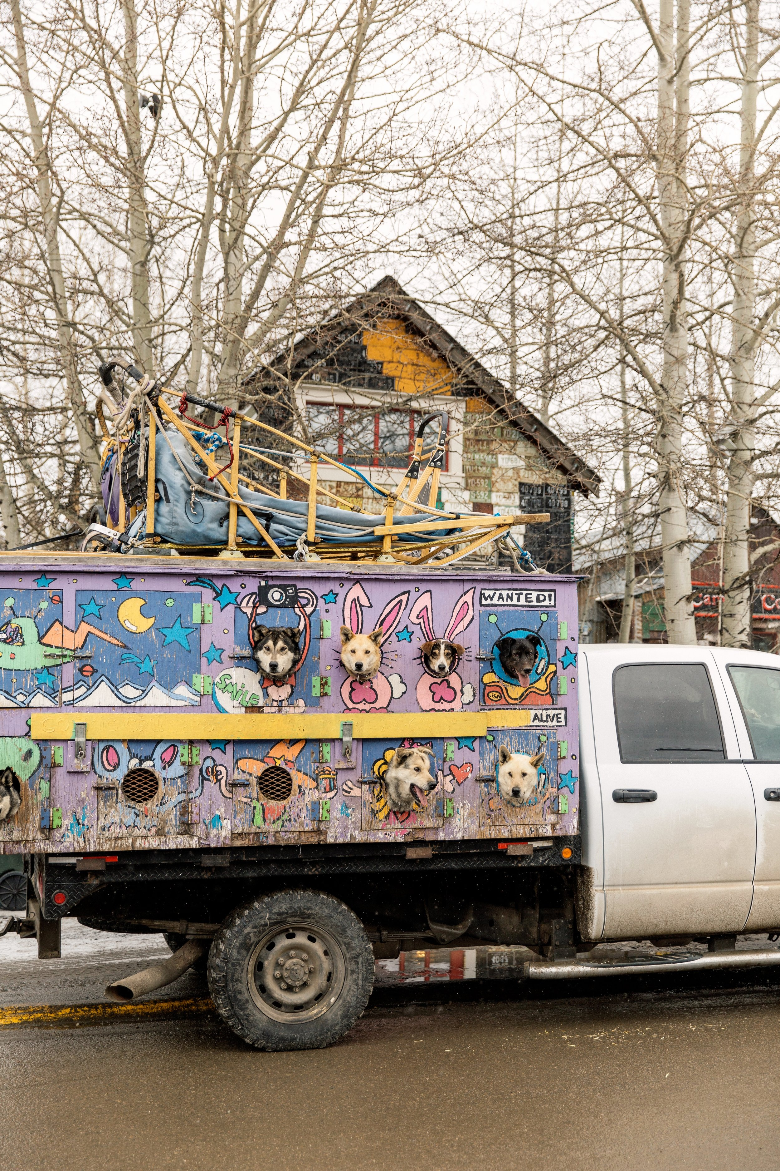 A dog sledding truck in Crested Butte, Colorado photographed for Sunset Magazine. Colorado Editorial Photographer, Denver Editorial Photographer, Montana Editorial Photographer, Boulder Editorial Photographer.