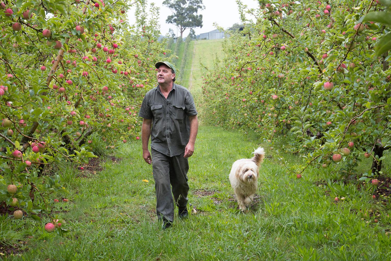 04-Lenswood-Apples-2267.jpg