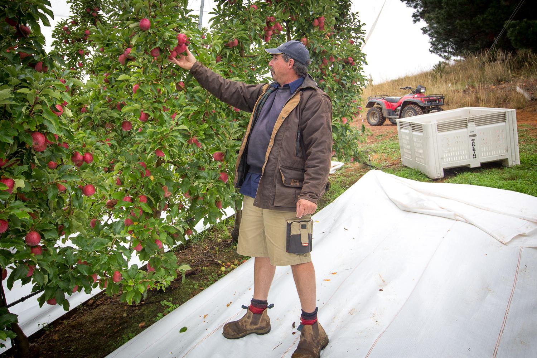 09-Lenswood-Apples-2461.jpg