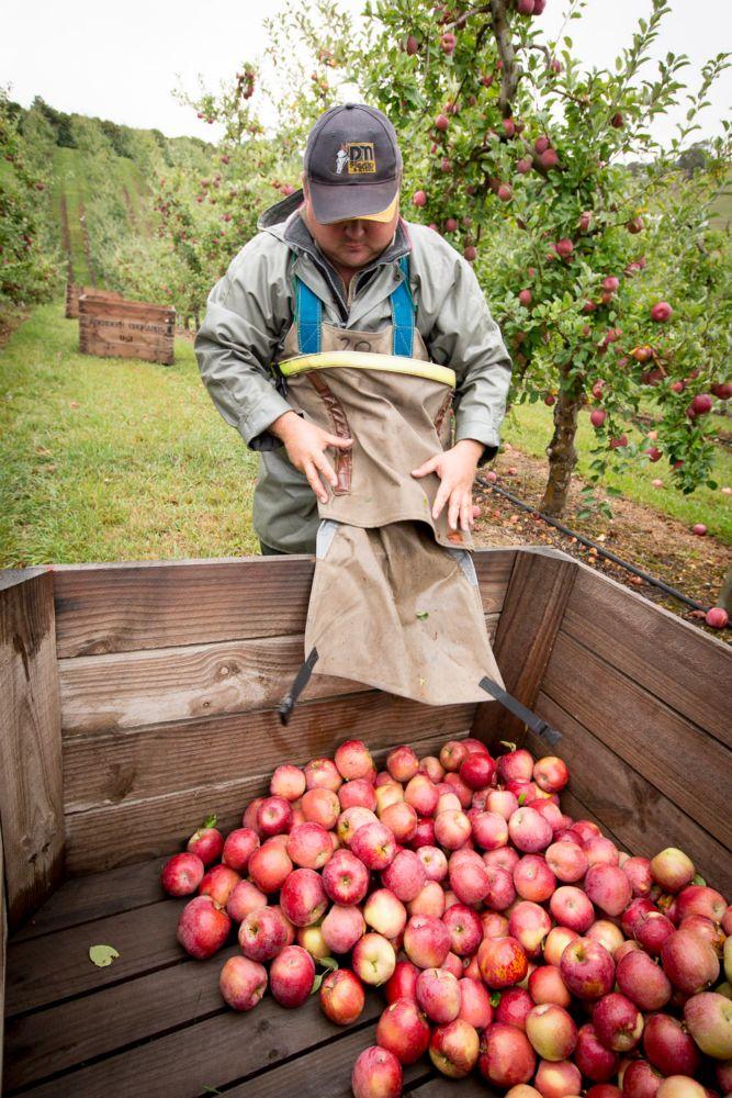 14-Lenswood-Apples-2556.jpg