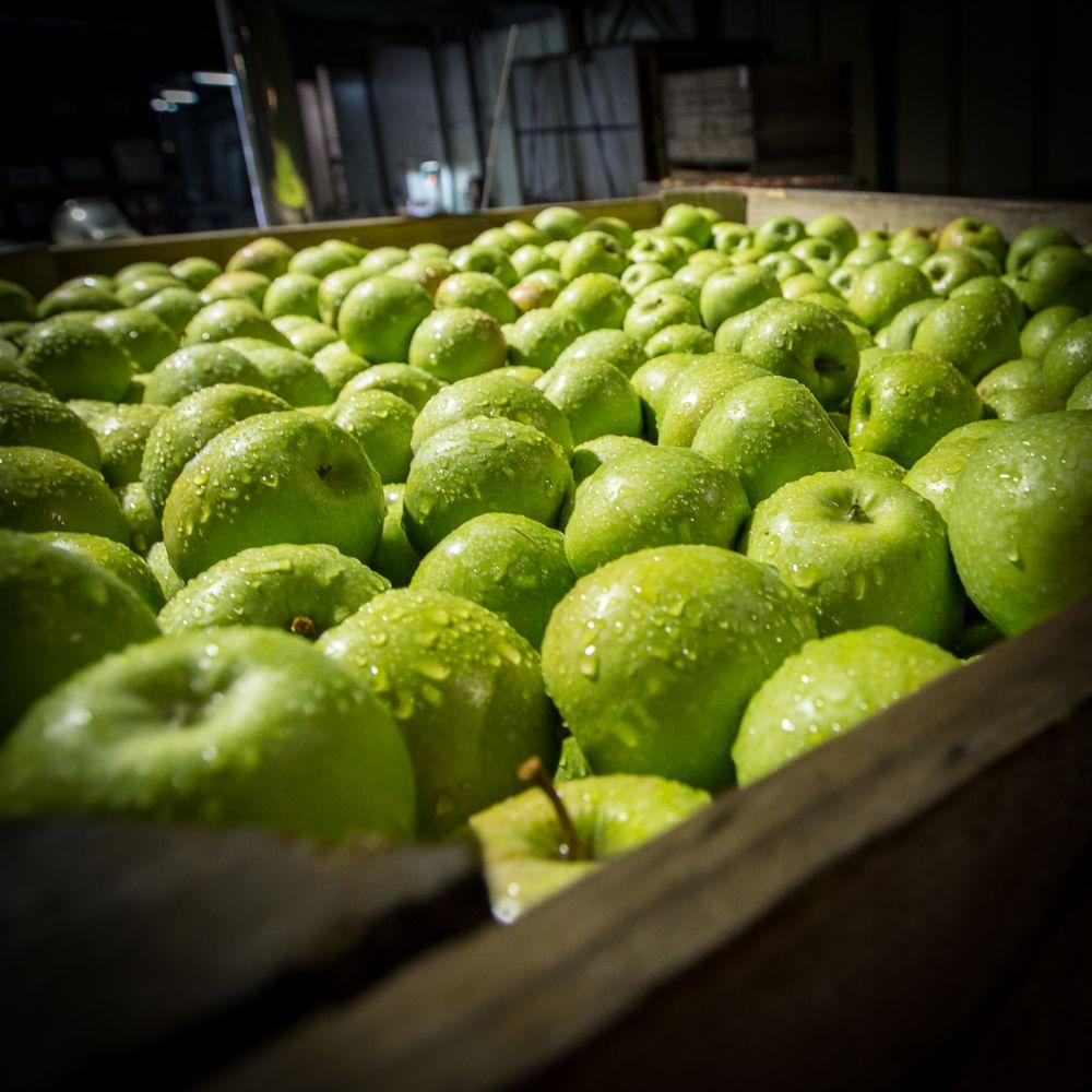 20-Lenswood-Apples-1459.jpg