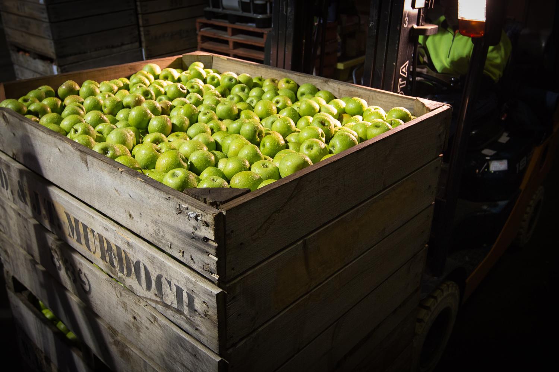 21-Lenswood-Apples-1464.jpg