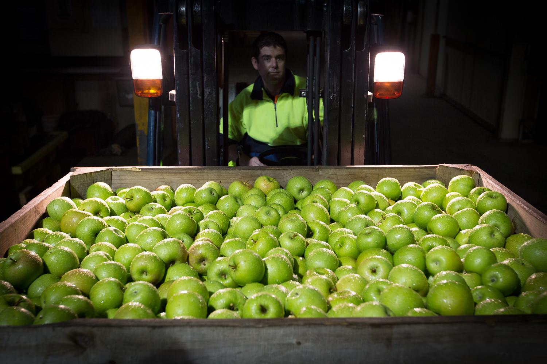 25-Lenswood-Apples-1469.jpg