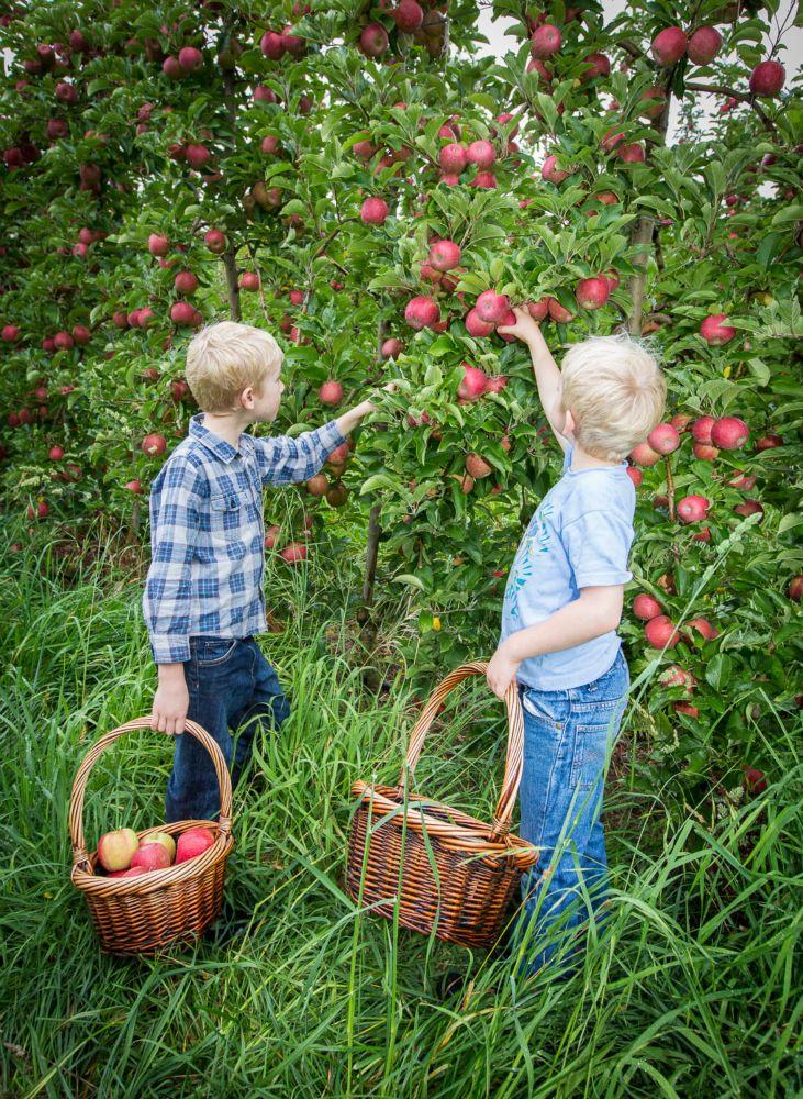 33-Lenswood-Apples-1619.jpg