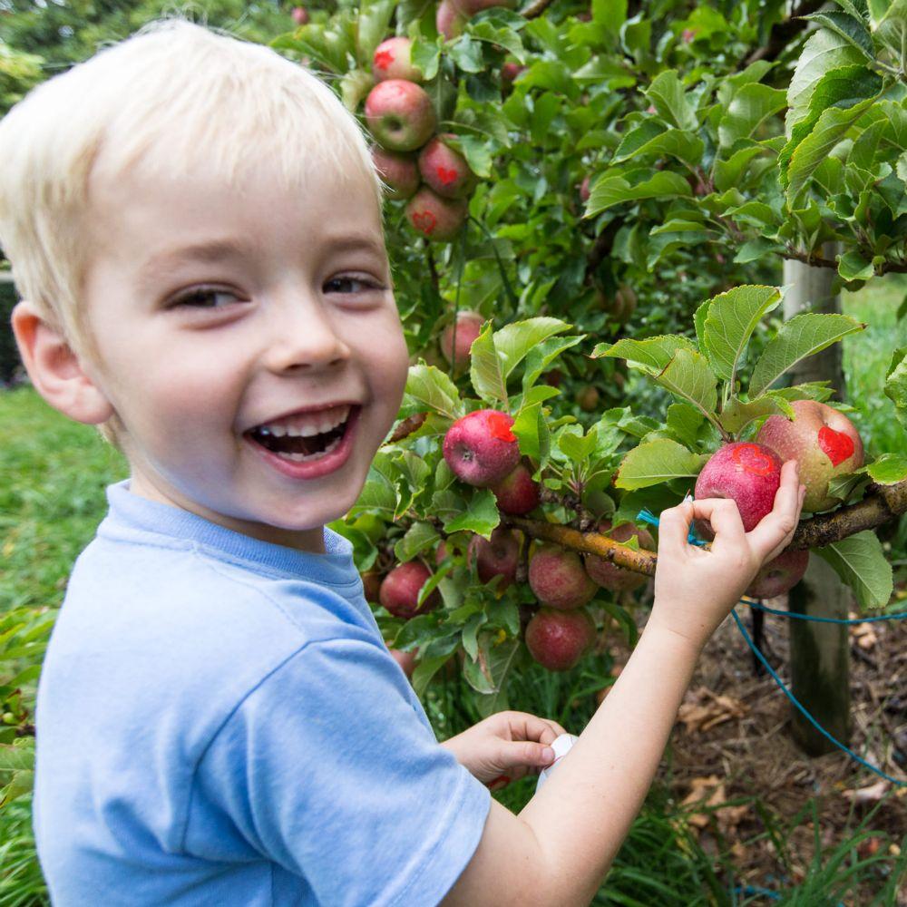 36-Lenswood-Apples-1567.jpg