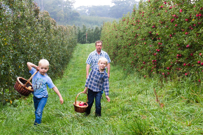 35-Lenswood-Apples-1631.jpg