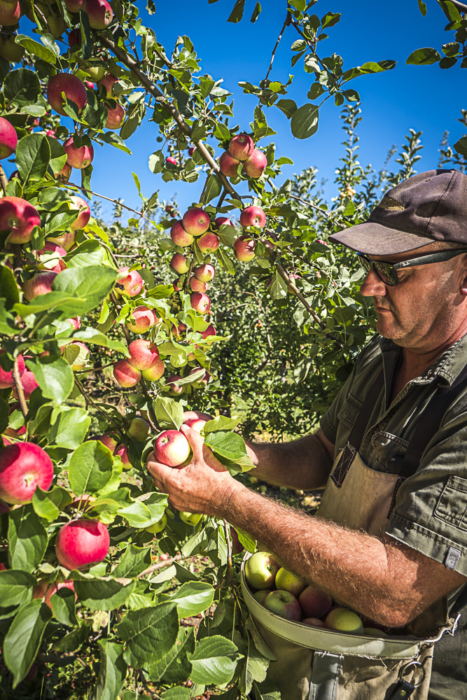 lobo-cider-apples-0356.jpg
