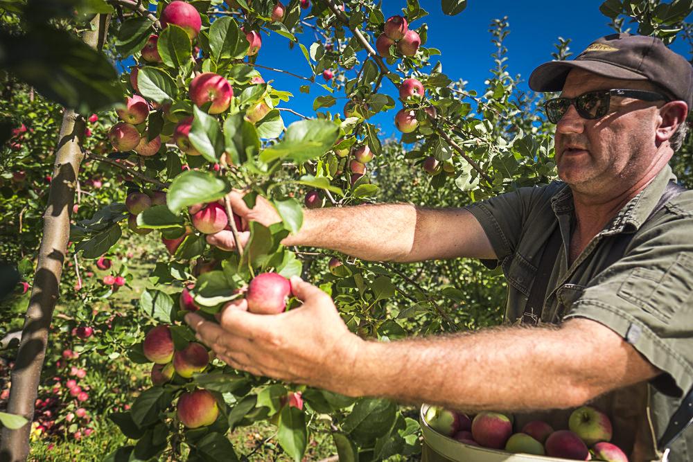 lobo-cider-apples-0366.jpg