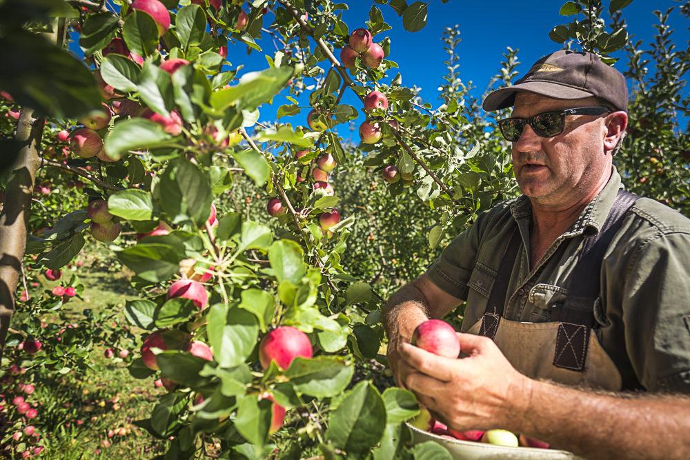 lobo-cider-apples-0368.jpg
