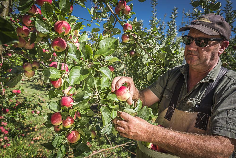 lobo-cider-apples-0370.jpg