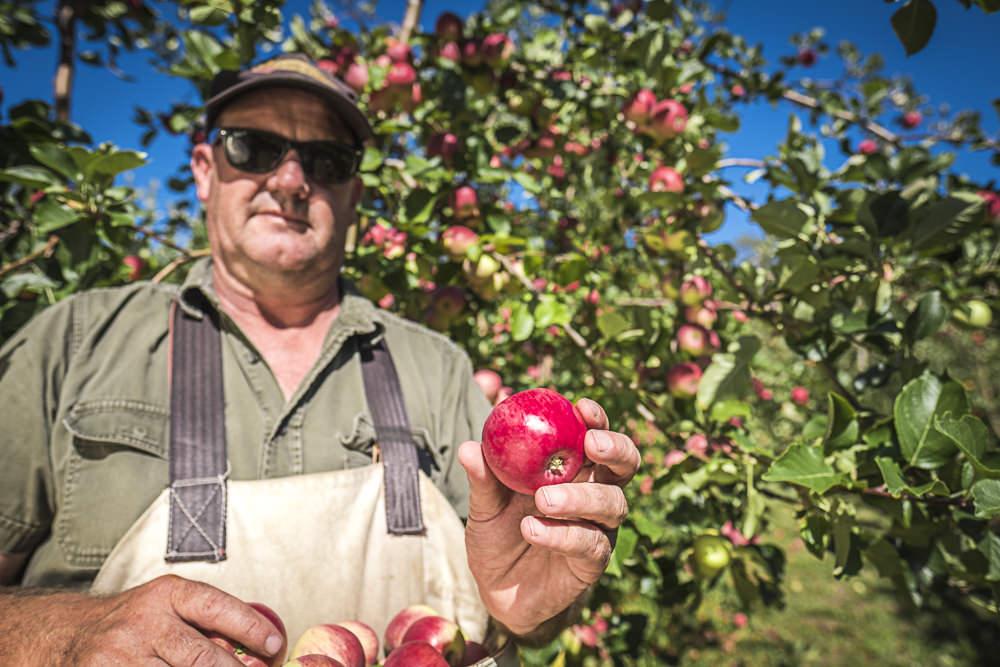 lobo-cider-apples-0405.jpg